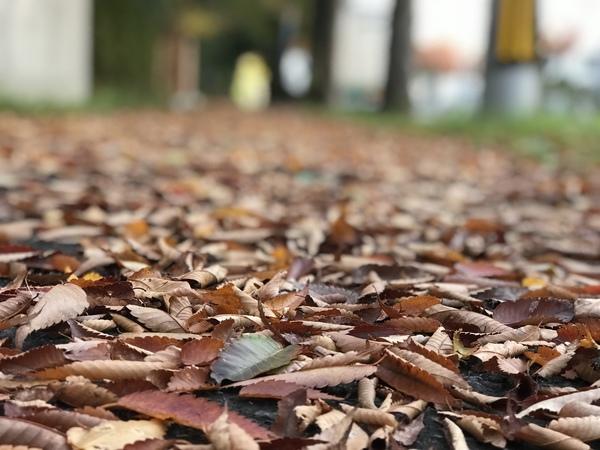 早くも11月。平成最後の秋です